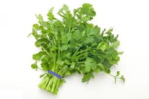 Cilantro, coriander, bunch, plantas aromaticas