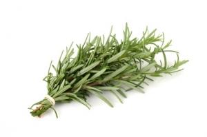 Romero, Rosemary, plantas aromaticas